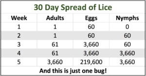 littlebugs-lice-removal